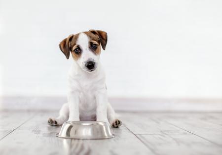 ¿Cuánta proteína debe comer un perro al día?