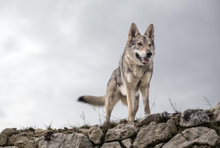 Acciones realizadas para la conservación del Lobo Mexicano