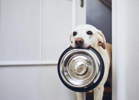 Cómo puede afectar una mala alimentación a la salud de mi perro