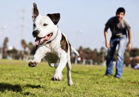 ¿Cuáles son los cuidados que un perro necesita?