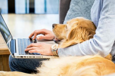 Trabajo en casa: haz equipo con tu perro y aumenta tu productividad y felicidad