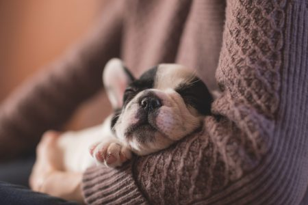 ¿Cómo cuidar a un cachorro?
