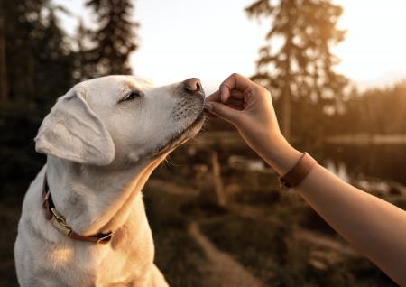 Beneficios de alimentar a mi perro con alimento súper premium