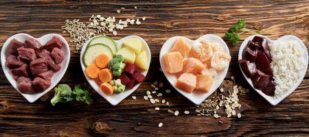 Nutracéuticos y alimento funcional, las tendencias alimenticias para mascotas de hoy