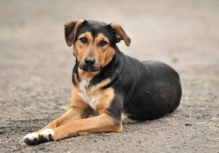 ¿Cuándo se festeja el Día del Perro Callejero?