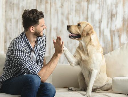 ¿Cómo puedo consentir a mi perro, sin humanizarlo?
