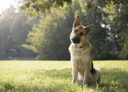 ¿Cómo puedo entender a mi perro?