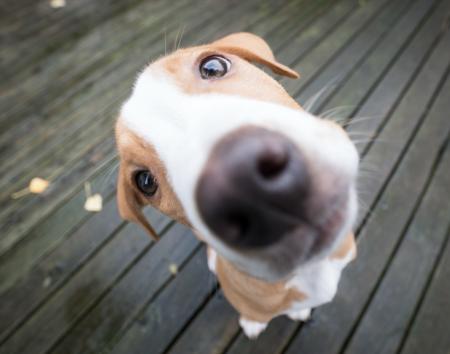 Datos curiosos del perro