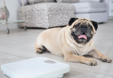 5 consejos prácticos para cuidar el peso de tu perro