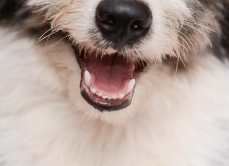 ¿Para qué sirven los bigotes del perro?