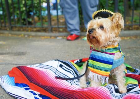 Qué cosas no debe comer un perro en las Fiestas Patrias