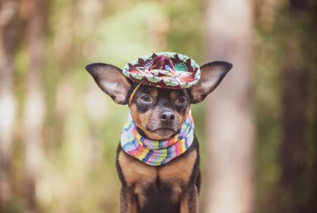 Cuidados que debe tener un perro durante las Fiestas Patrias