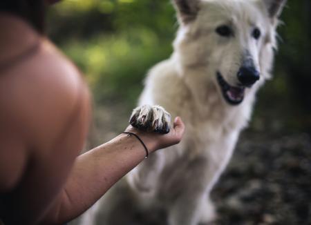 6 Beneficios a la salud que te da la compañía de un perro
