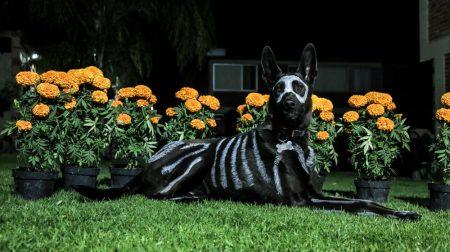Festeja el Día de Muertos con tus mascotas en casa