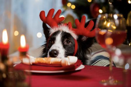 Comidas Navideñas que no pueden comer los perros