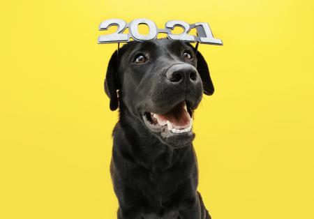 Cuidados de las mascotas en Año Nuevo