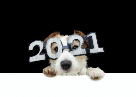 4 propósitos de año nuevo que puedes hacer para cuidar a tu perro