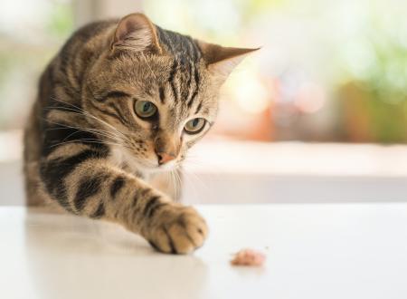 Datos curiosos sobre la historia de los gatos