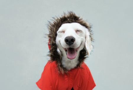 5 razones para abrigar a tu perro en invierno