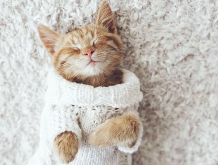 Cómo puedo cuidar a mi gato en invierno