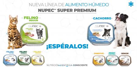 Recomendaciones de uso de los alimentos húmedos para mascotas