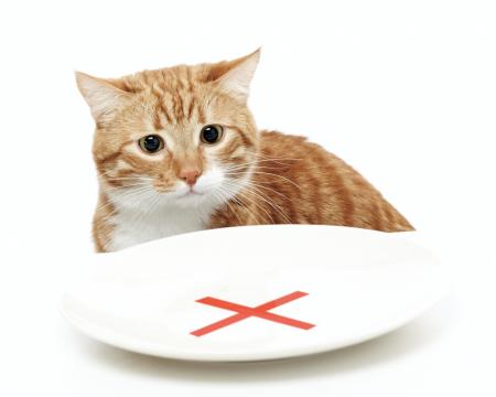 Cosas que un gato no puede comer