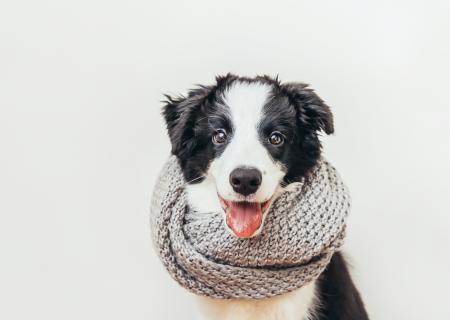 Cuidados de los perros en invierno