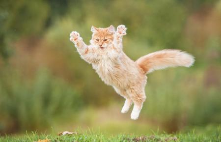Datos curiosos que no sabías de los gatos