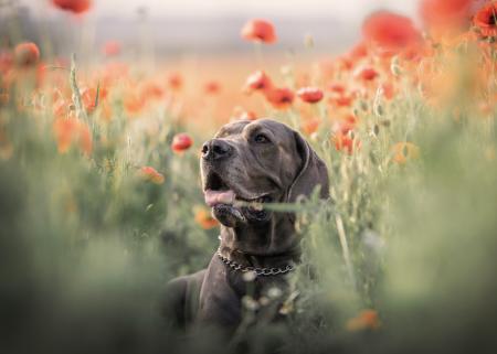 Fun Facts: Comportamientos curiosos de los perros que heredaron de sus antepasados