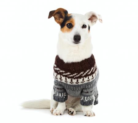 ¿Es buena idea ponerle un suéter a mi perro?