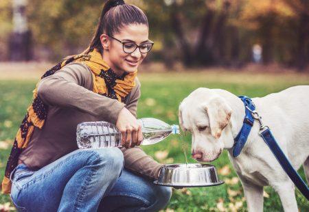 Sabías que es muy importante la hidratación de tu mascota