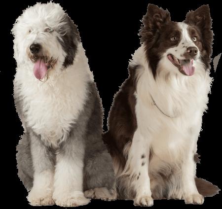 Sabías que en NUPEC usamos productos de la más alta calidad para nutrir a tus mascotas