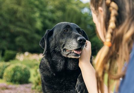 ¿Cómo puedo cuidar las articulaciones de mi perro?