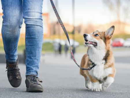 ¿Cómo puedo escoger la correa para mi perro?