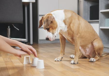 ¿Cómo puedo estimular la inteligencia de mi perro?