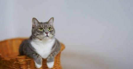 Croquetas NUPEC Gato