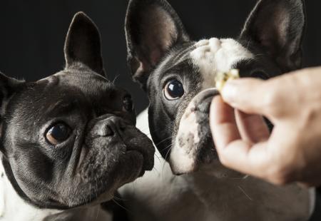 5 cosas que no sabías de las alergias alimentarias de los perros