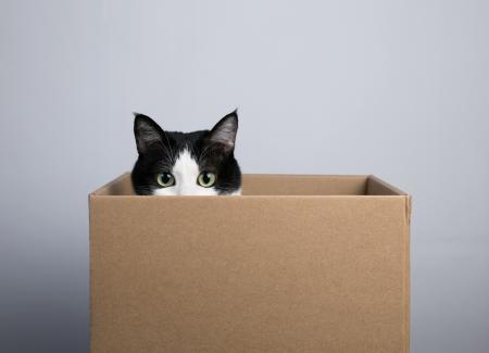¿Por qué a los gatos les gustan tanto las cajas?