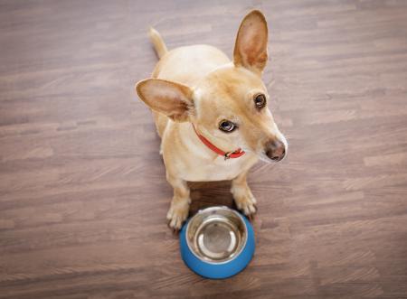 Se me acabaron las croquetas de mi perro, ¿qué le puedo dar?