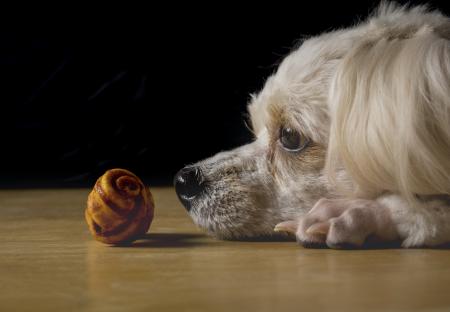 5 tips para saber reconocer si un perro está estresado