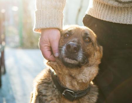 ¿Por qué los perros de los refugios se entregan esterilizados?