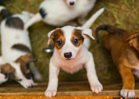 Lo que no debes hacer después de adoptar un perro