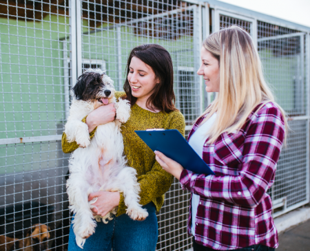 Cómo puedo ayudar a un Refugio de perros