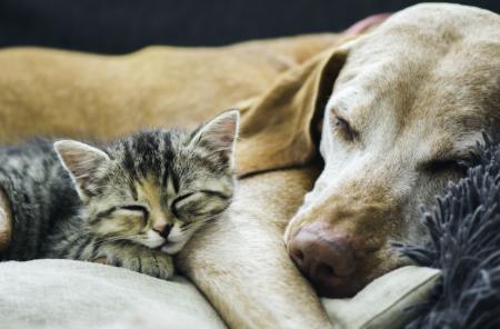 Quiero adoptar una mascota, ¿cómo elijo entre un perro o un gato? – TEST para saber que mascota debes adoptar