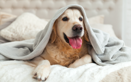 Cosas que debes tener en casa para la llegada de un perro