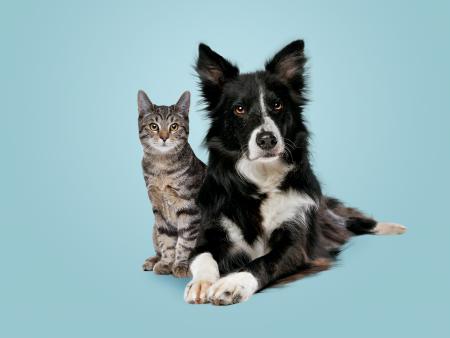 Cosas que crees que los perros hacen por naturaleza, pero son un mito