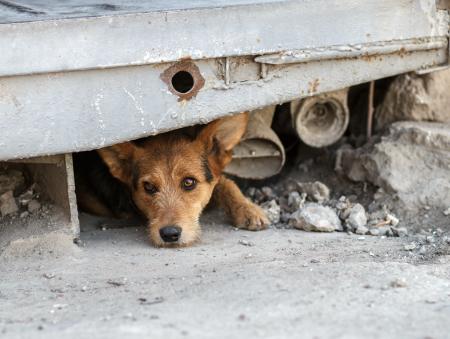 ¿Porqué hay tantos perros en la calle?