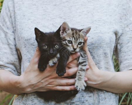 Adopté a un gatito, ¿cómo puedo hacer para que se lleve bien con mi perro?